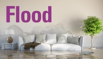 Insurance Loss Assessor - flood damage claim